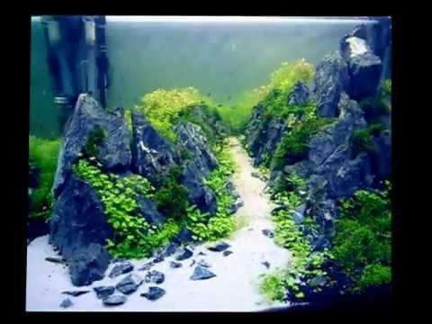 The Road to the White Mountain 白山 Haku-san Aquascape 4KVideo ...