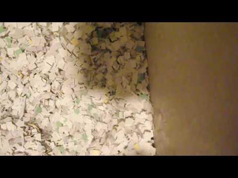 Office Supply ASMR: Box of Shreddings