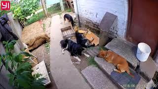 Лечим кашель у собак тетрациклином .
