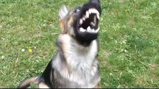 Guaranteed to make your dog HOWL