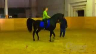 Конный спорт обучение. Сбор лошади. Мастер класс.