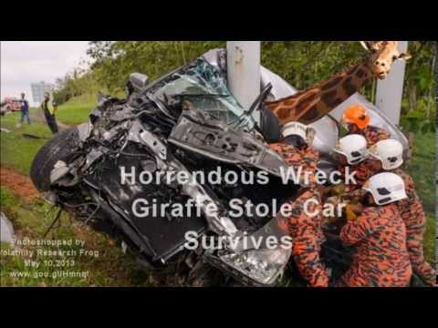 Horrendous Wreck Giraffe Stole Car Survives