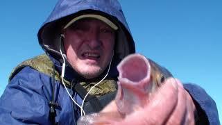 Язь Лещ на снасть кольцо яйца Отчёт очередной рыбалки Июнь 2021