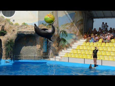 Dolphin Full Show Odessa 2019 Полное шоу с дельфинами дельфинарий