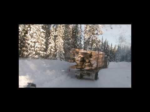 Colorado Logging