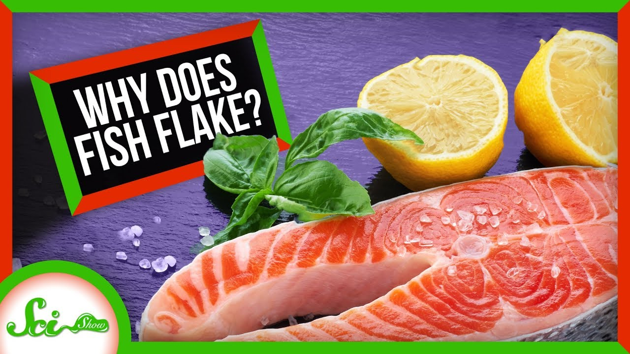 SciShow:Why Does Fish Flake