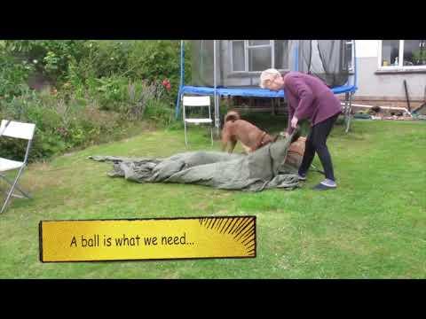 Irish Terrier helps
