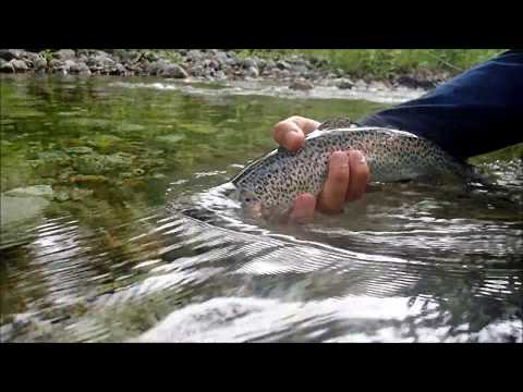 Small River, Big Trout | California Fly Fishing