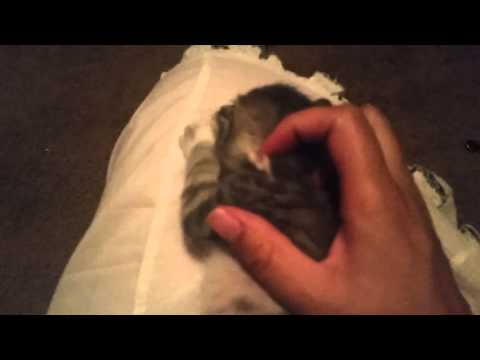 Kittens Crying 6/9/15