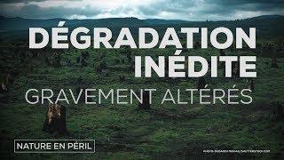 Rapport de l'ONU : la nature en péril