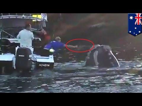 Wieloryb prosi wędkarzy o pomoc