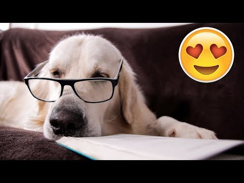 Dog falls asleep while reading a book