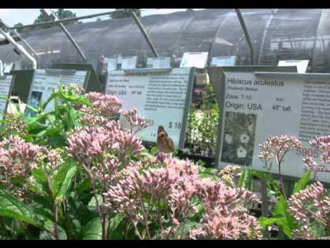 Plant Delight Nursery