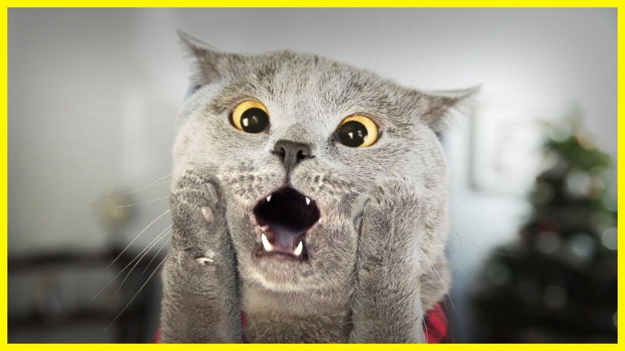 Картинки про смешных котов картинки, руками рождество открытки