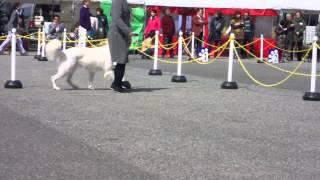 H26年3月22日23日に 三木でドッグショーがあり タキオンの応援に行って...