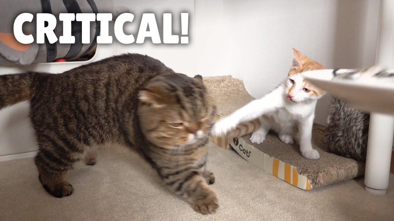 LuLu Got Smacked By a Kitten! | Kittisaurus