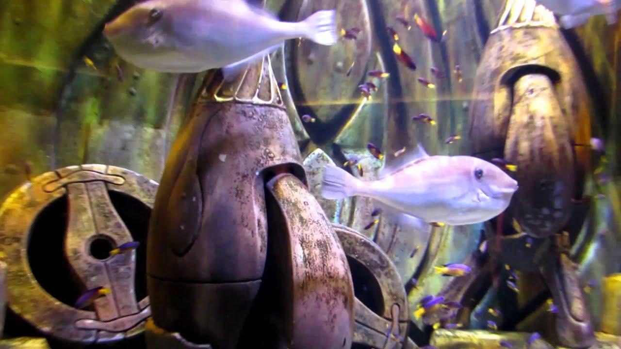 Freshwater Aquarium Fish In Dubai - Atlantis the lost chambers aquarium dubai hd