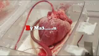 Naa manasuni thaake swarama new song by Matheen edited version