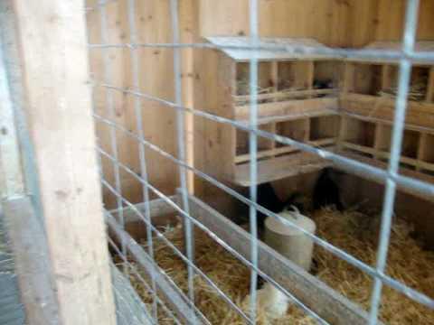 Inside bird coop