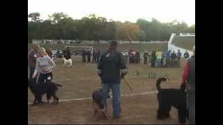 Выставка собак Кривой Рог 2011