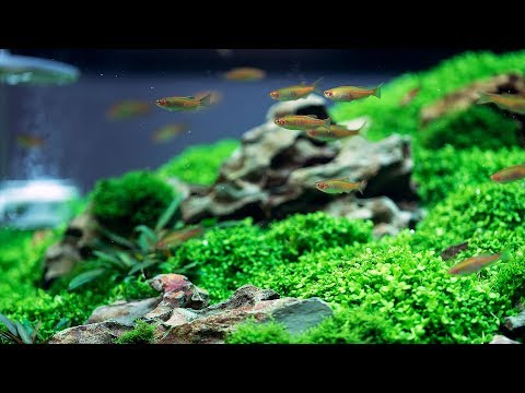 RECOVER OUR AQUASCAPE FROM A COMPLETE DISASTER! REBUILD AFTER LEAKING!