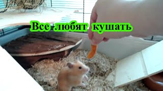 Все любят покушать (нарезка видео о животных)