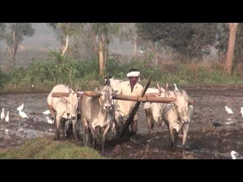 Agrarian Society, Agriculture, Afro-Eurasia, Archeology, Civilization (#GH5060) Trailer