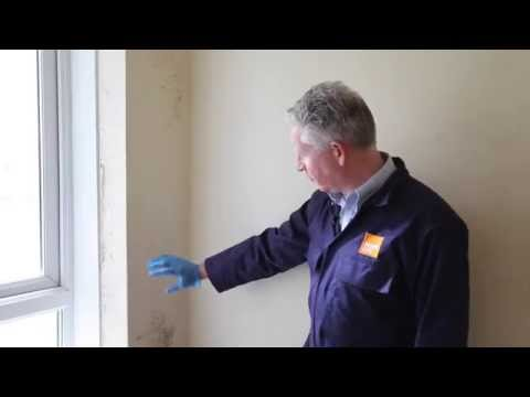 How to treat mould and prevent it in the future