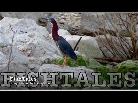 FishTales: 神風 Kamikaze Crickets