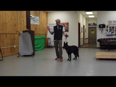 How to understand your dog! -Dog Training with America's Canine Educator