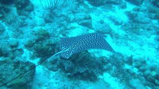 Karol Meyer - Freediving event at Buddy Dive Resort - Bonaire