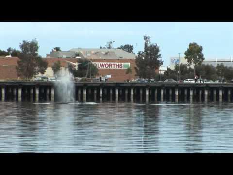 Port Augusta Whales 2011