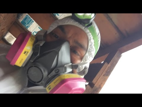 cleaning attic !! remove contaminated insulation