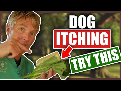 Dog Itching And Scratching? New Remedy!