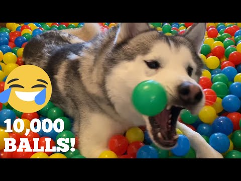 10,000 Balls In Our New Home For Ours Kids & Huskies! [TRY NOT TO SMILE!]