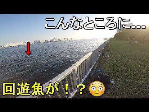 【暁ふ頭公園】東京都の意外な釣り場で意外な魚が釣れてるらしい!?【2019.11.01】