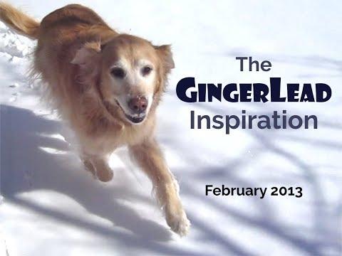 Ginger The Golden Retriever Puppy Inspires After Reconstructive Hip Surgery