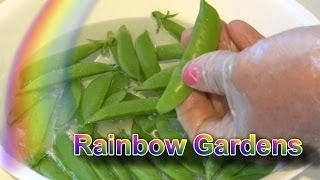 How to Trim Sugar Snap Peas