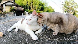 パステルカラーのサビ猫とてんとう虫柄の猫がお互いをグルーミングしあう