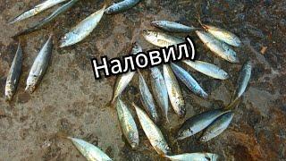 Самодур или пилькер на что лучше ловить саргана и ставриду/ fishing in the Black sea,Ukrane Odessa
