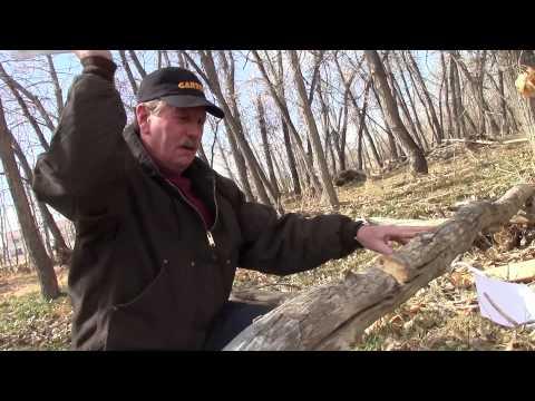Amazing Knife Cuts Tree in Half and Stays Razor Sharp 2 | SharpensBEST com