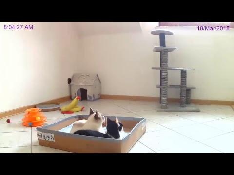 Rescued Kittens - Jenny, Boom & Mr. Plush