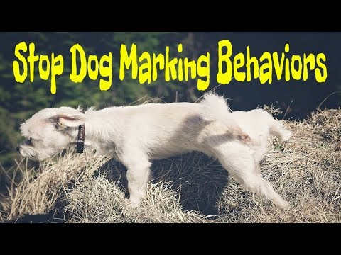 how-to-stop-dog-marking-behavior-|-make-your-doggie-a-potty-champion-(house-training)