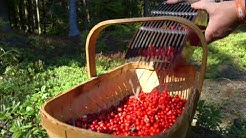 "Swedish Lingonberries  - ""A Living Tradition"""