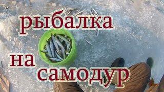 Ловля корюшки и зубаря на самодур с опарышам рыбалка в Тавричанке