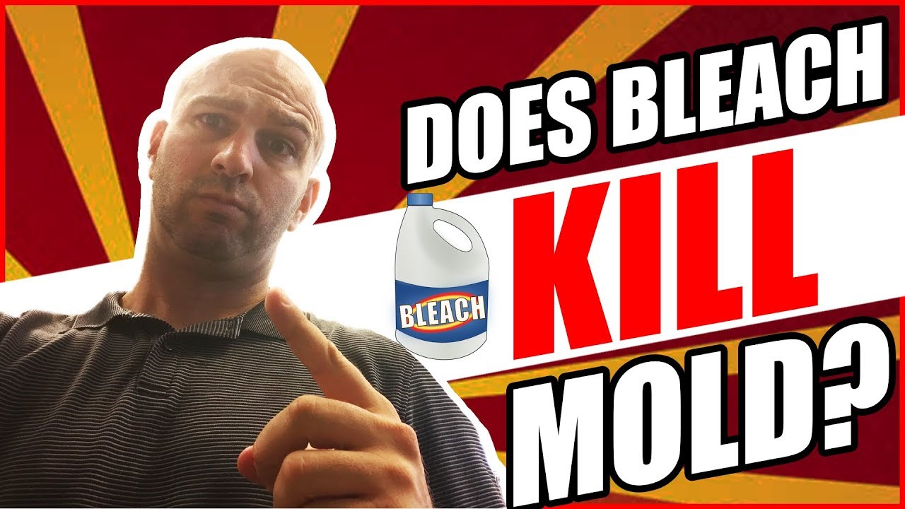 Does Bleach Kill Mold? ? Don't Make This Simple Mistake ...