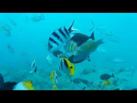 Scuba Diving at Commercial Port of Guam 1080p HD