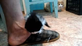 Найден котёнок на Областной в Ижевске