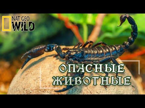 Опасные животные Амазонии. Мир природы, дикие животные. #Документальный фильм. National Geographic - Видео онлайн