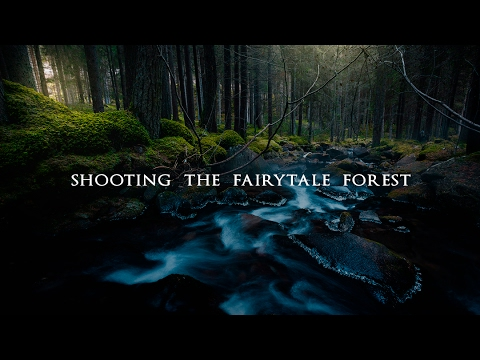 POV Landscape Photography - Shooting the fairytale forest in the Alps